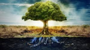 images - Tree of Life