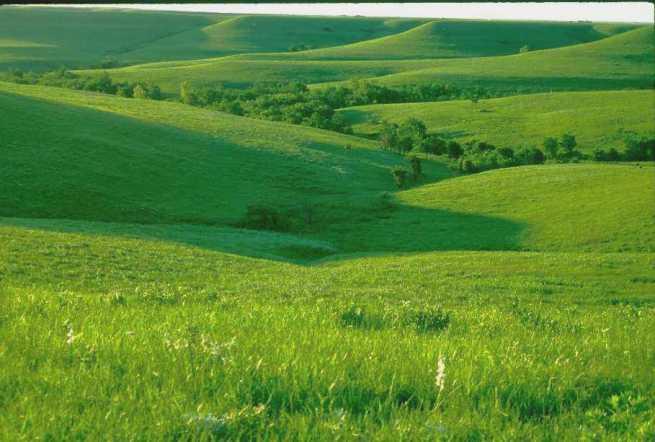 A grassy plain