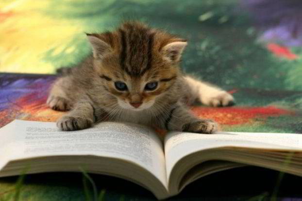 Flash Fiction - Cat reading